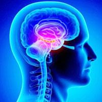 Какие продукты питания способствуют улучшению работы мозга