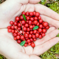 Осенний «суперфрукт»: 5 самых полезных свойств брусники