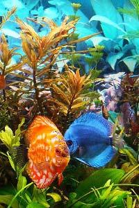 Аквариум в интерьере: создаем маленькое море