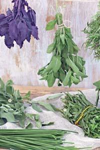 Как правильно заготавливать и хранить свежую зелень