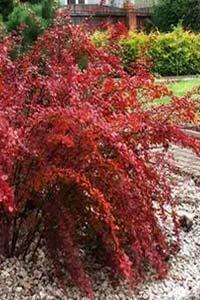 Использование садовых растений для поддержания здоровья