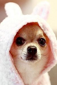 Одежда для собак - дань моде или функциональная необходимость