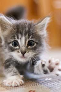 В доме появился котенок