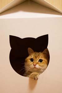 Кошка в доме: если вы решили завести себе питомца