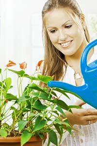 4 правила ухода за комнатными растениями