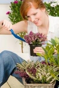 Выращивание из семян красивый цветок