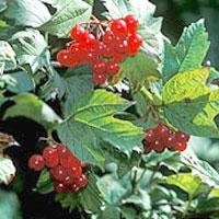 Осенние ягоды оказывают благотворное влияние на наш организм