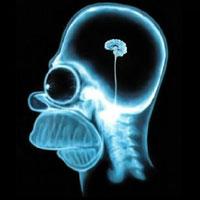 10 способов улучшить память и умственные способности