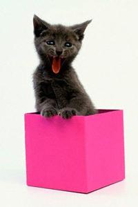 Кот в посылке