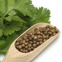 Кориандр и его полезные свойства - не только витаминная добавка