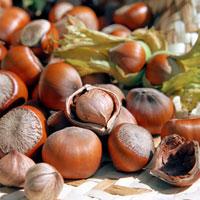 Фундук: полезные свойства лесного ореха
